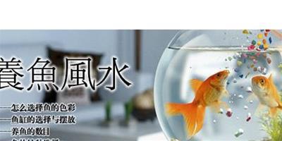 養魚風水注意事項有哪些