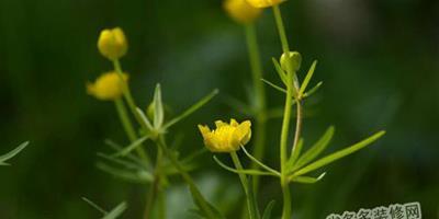 改造植物中的相關基因 提高作物產量